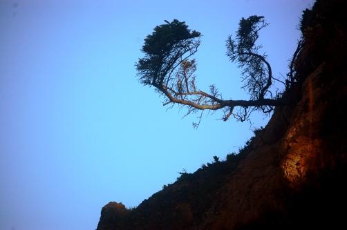Miogi's tree